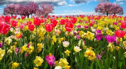 spring-awakening-1197603_960_720